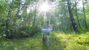 Forêt de bouleau. timelapse. 4K. PLEIN HD, 4096x2304. banque de vidéos