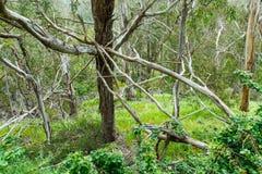 Forêt de branches et de vignes embrouillées de lierre Photos libres de droits