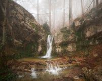 Forêt de brouillard Photos libres de droits