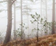 Forêt de brouillard Photographie stock