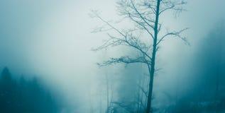 Forêt 3 de brouillard Photographie stock