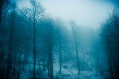 Forêt de brouillard Images stock