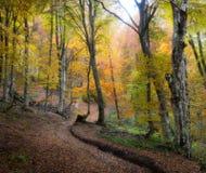 Forêt de brouillard d'automne Photo stock
