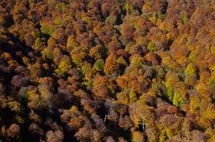 Forêt de brouillard d'automne Images libres de droits