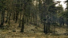 Forêt de cèdre à Antalya Photographie stock