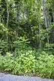 Forêt de côté d'itinéraire aménagé pour amateurs de la nature Image stock