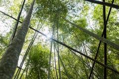 Forêt de cannes en bambou Photo libre de droits