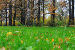 Forêt de centrale Image libre de droits