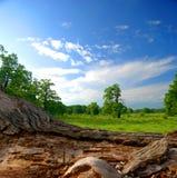 Forêt de chêne avec le ciel bleu images stock