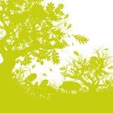 Forêt de chêne avec un sanglier Photo stock