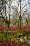 forêt de chêne et mur en pierre Image libre de droits