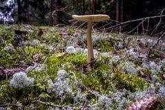 Forêt de champignon de Brown en automne Image stock