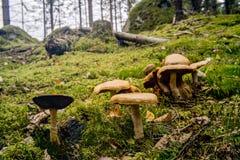 Forêt de champignon en automne Photo libre de droits