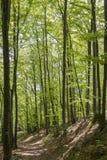 Forêt de charme Photographie stock libre de droits