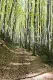 Forêt de charme Photographie stock
