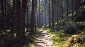 Forêt de chemin au printemps Photos libres de droits