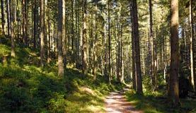 Forêt de chemin au printemps Photographie stock