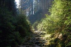 Forêt de chemin au printemps Images libres de droits
