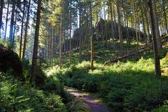 Forêt de chemin au printemps Photo stock