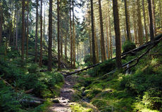 Forêt de chemin au printemps Photo libre de droits