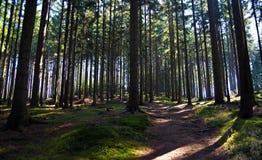 Forêt de chemin au printemps Images stock