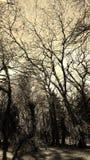 Forêt de chien colly photographie stock