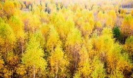 Forêt de chute Photographie stock