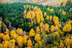 Forêt de ci-avant images stock