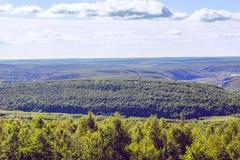 Forêt de ci-avant Photographie stock libre de droits