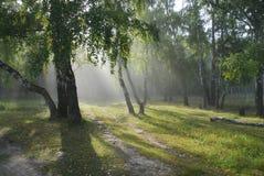 Forêt de conte de fées. Photos libres de droits