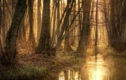 Forêt de conte de fées Photo stock