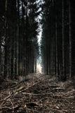 Forêt de conte de fées photo libre de droits