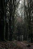 Forêt de conte de fées photos stock