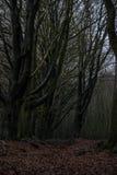 Forêt de conte de fées images stock