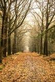 Forêt de conte de fées image stock