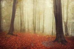 Forêt de conte de fées avec l'atmosphère brumeuse Image libre de droits
