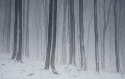 Forêt de conte de fées d'hiver le jour de Noël Photo stock