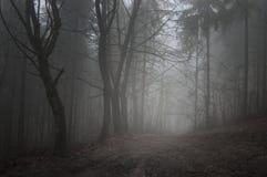 Forêt de conte de fées d'imagination avec le brouillard en automne Photo libre de droits