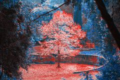 Forêt de conte de fées dans la région sauvage images libres de droits