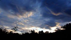 Forêt de coucher du soleil banque de vidéos