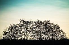 Forêt de coucher du soleil Photo libre de droits