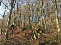 Forêt de coucher du soleil Images libres de droits