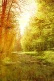 Forêt de cru Photo stock