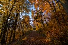 Forêt de cuvette de route d'Atumn Photographie stock libre de droits