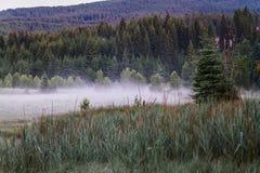 Forêt de début de la matinée avec le brouillard images stock