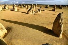 Forêt de désert Image stock