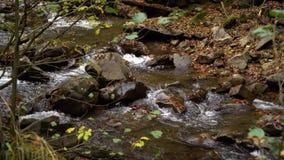 Forêt de forêt d'automne dans les montagnes Fleuve de montagne Courant avec de l'eau froide banque de vidéos