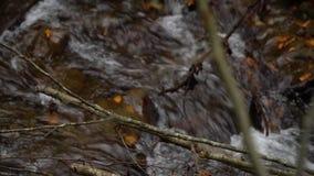 Forêt de forêt d'automne dans les montagnes Fleuve de montagne Courant avec de l'eau froide clips vidéos