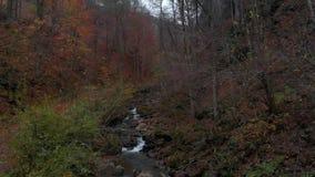 Forêt de forêt d'automne dans les montagnes Fleuve de montagne Courant avec de l'eau froide Tir du quadcopter banque de vidéos