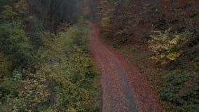 Forêt de forêt d'automne dans les montagnes Fleuve de montagne Courant avec de l'eau froide Tir du quadcopter clips vidéos